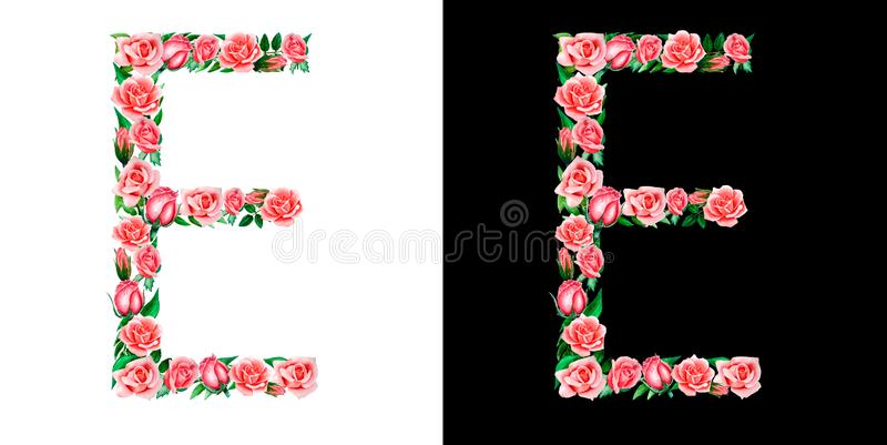 Watercolor floral alphabet of roses, Monogram, title letter E isolated on black and white background. Watercolor floral alphabet of roses, Monogram, title stock image
