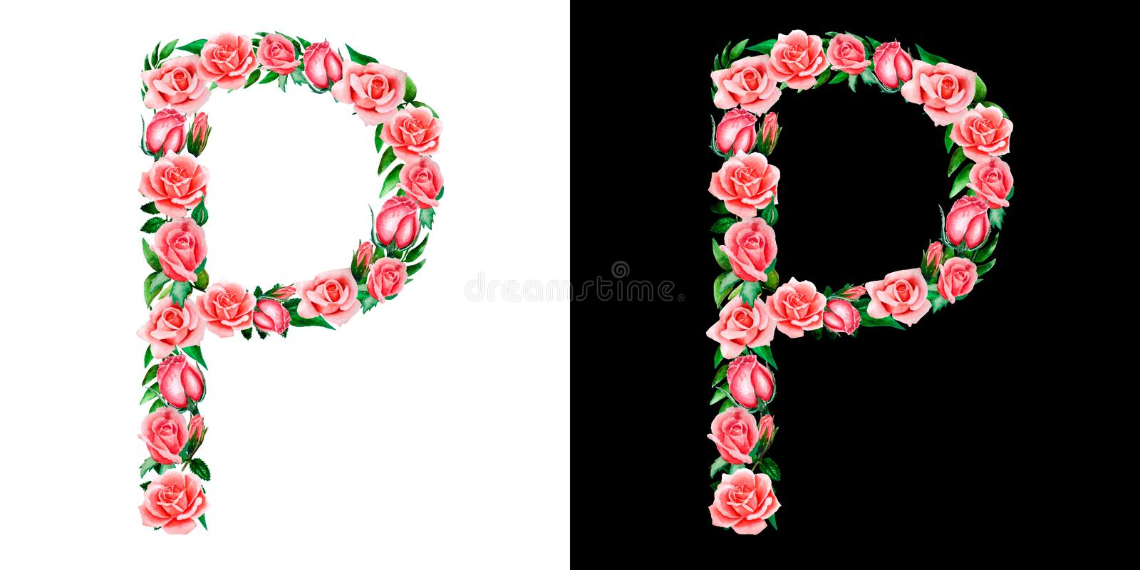Watercolor floral alphabet of roses, Monogram, title letter P isolated on black and white background. Watercolor floral alphabet of roses, Monogram, title stock photos