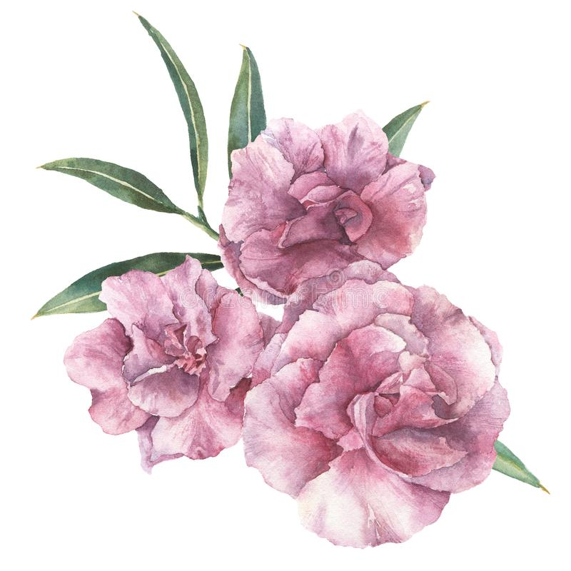 Watercolor floral bouquet. Hand painted oleander with leaves and branch isolated on white background. Botanical royalty free illustration