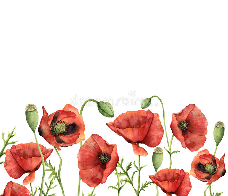 Watercolor floral card with poppies. Hand painted illustration with flowers, leaves, seed capsule and branches isolated vector illustration