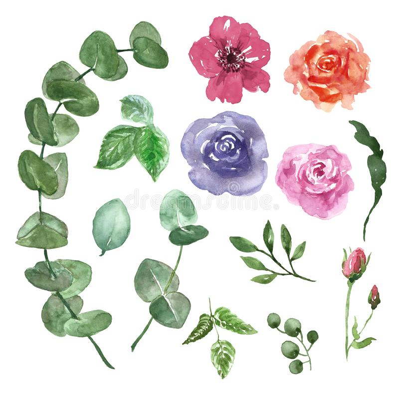 Watercolor flowers set. hand painted eucalyptus branch, red, purple and pink roses, green leaves, isolated on white background. vector illustration