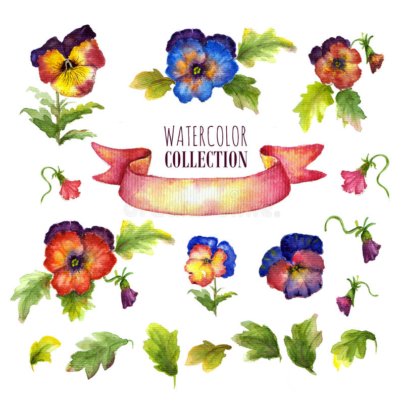 Watercolor floral collection with multicolored pansies. There are flowers, leaves, buds, satin ribbon stock illustration
