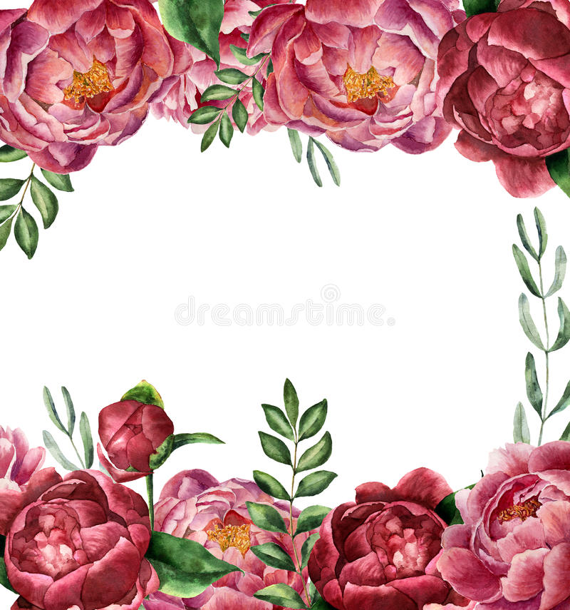Watercolor floral frame with peony and greenery. Hand painted border with flowers with leaves, branch of eucalyptus and royalty free illustration