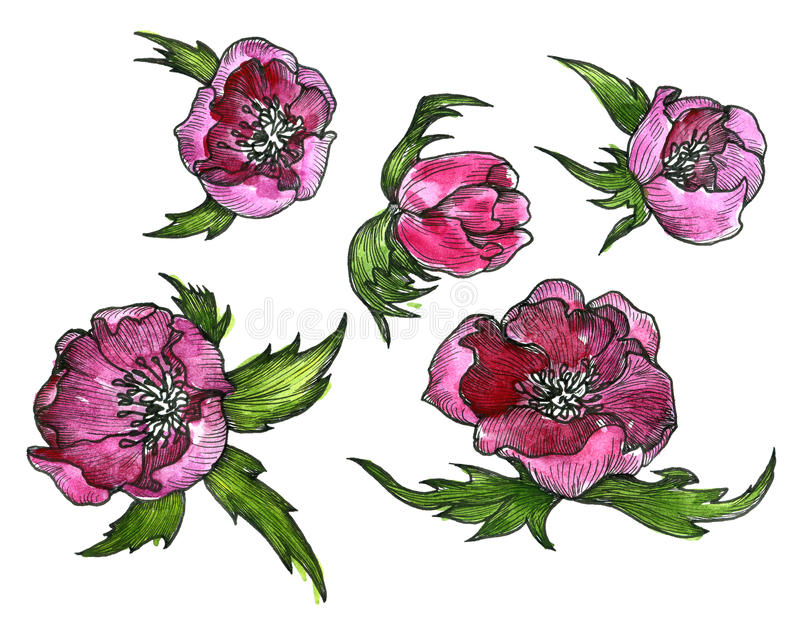Watercolor floral set royalty free illustration