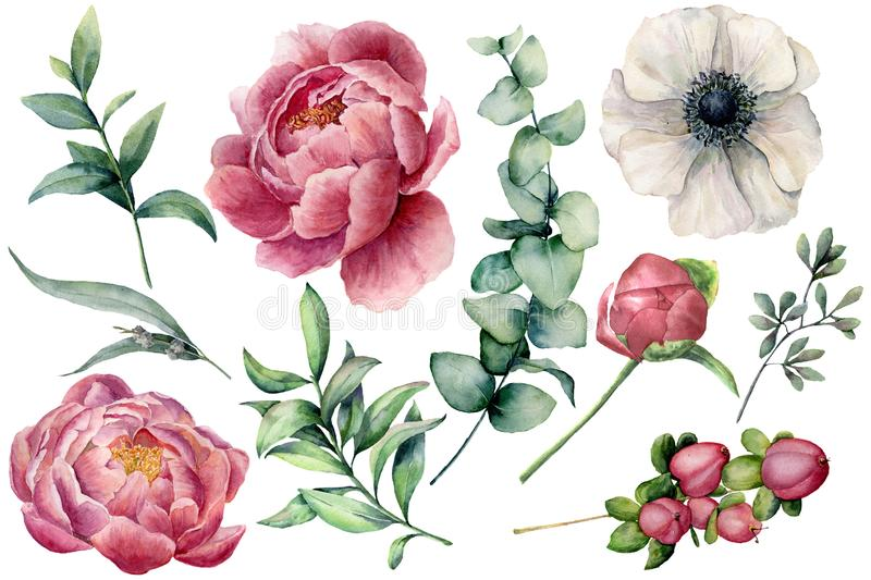 Watercolor floral set with flowers and eucalyptus branch. Hand painted peony, anemone, berries and leaves isolated on stock illustration