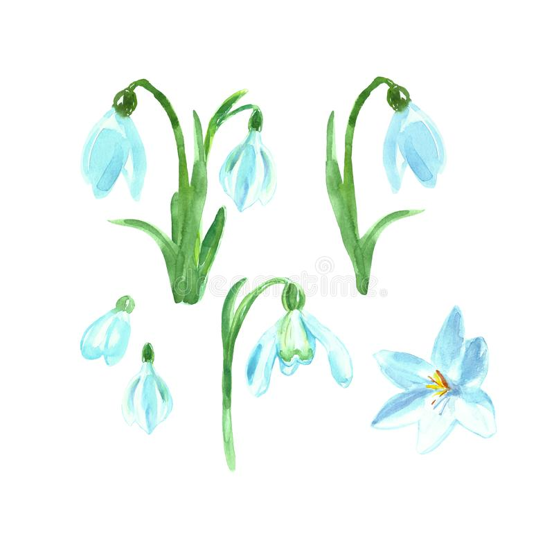 Watercolor floral set with spring flowers. Hand painted snowdrops royalty free illustration