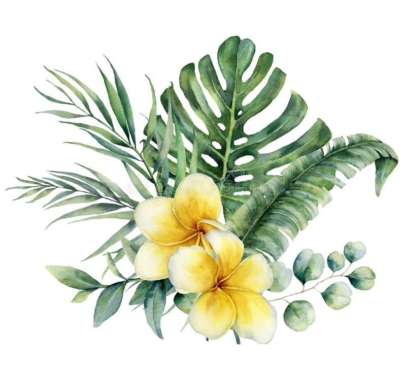 Watercolor floral tropical bouquet with plumeria and silver dollar eucalyptus. Hand painted monstera, palm branch vector illustration