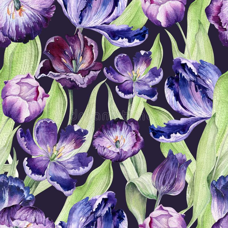 Watercolor floral tulip backgraund. Seamless colorful spring pattern. Watercolour violet tulip plant. Purple blossom. Drawing royalty free illustration