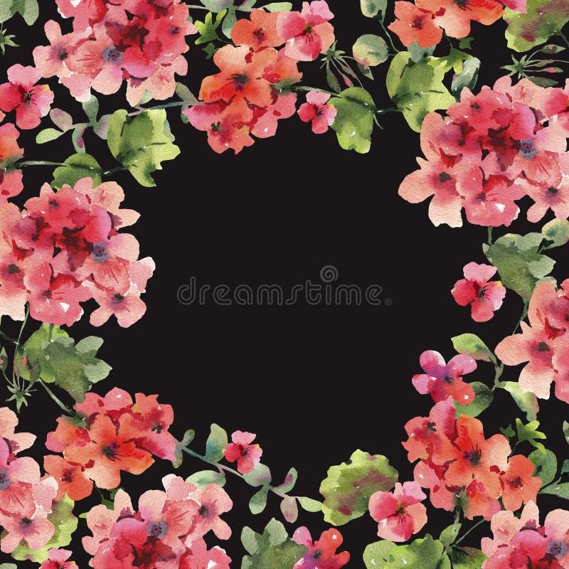 Watercolor Flower Geranium, Pelargonium, Red Flowers, Natural Isolated Illustration on black background. Spring Summer Greeting Card, Wedding Invitation, Round royalty free illustration