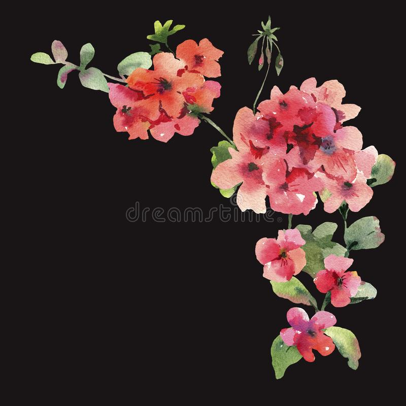 Watercolor Flower Geranium, Pelargonium, Red Flowers, Natural Isolated Illustration on black background. Spring Summer Greeting Card stock illustration