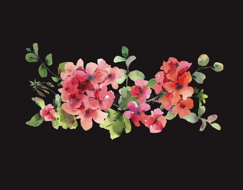 Watercolor Flower Geranium, Pelargonium, Red Flowers, Natural Isolated Illustration on black background. Spring Summer Horizontal Frame vector illustration