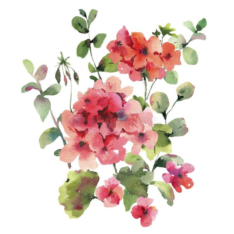 Watercolor Flower Geranium, Pelargonium, Red Flowers, Natural Isolated Illustration. Spring Summer Greeting Card royalty free illustration