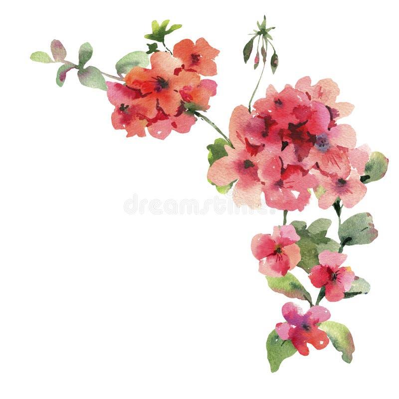 Watercolor Flower Geranium, Pelargonium, Red Flowers, Natural Isolated Illustration. Spring Summer Greeting Card stock illustration