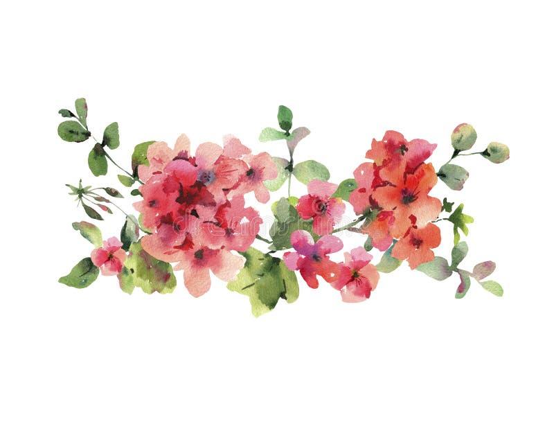 Watercolor Flower Geranium, Pelargonium, Red Flowers, Natural Isolated Illustration. Spring Summer Horizontal Frame vector illustration