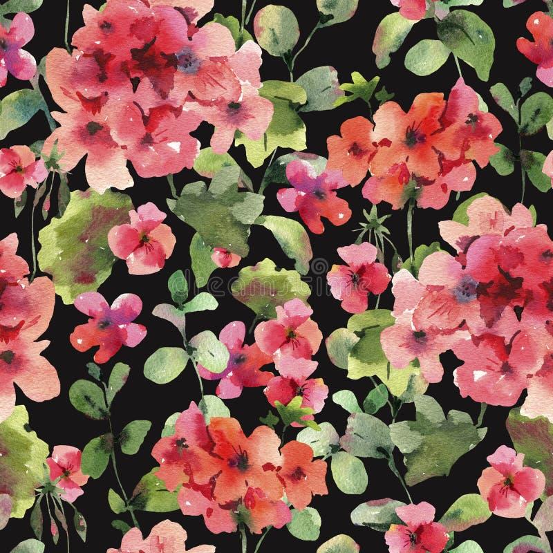 Watercolor Flower Geranium Seamess Pattern, Pelargonium Texture, Red Flowers. Natural Summer IIllustration on Black Background vector illustration