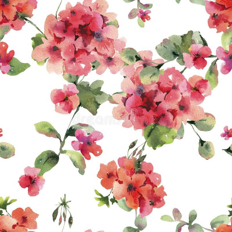 Watercolor Flower Geranium Seamess Pattern, Pelargonium Texture, Red Flowers. Natural Summer IIllustration on White Background stock illustration