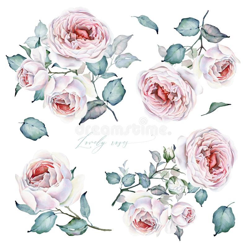 Watercolor Flowers Set. Roses Bouquets and floral elements. White and Pink Roses stock illustration