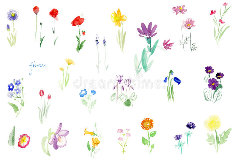 Watercolor flowers tender set. Watercolor flowers tender delicate set Poppy snowdrops sunflower forget-me-not primula daffodil lavander tulip orchid stock illustration