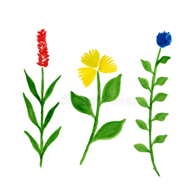 Watercolor flowers vector illustration. stock illustration