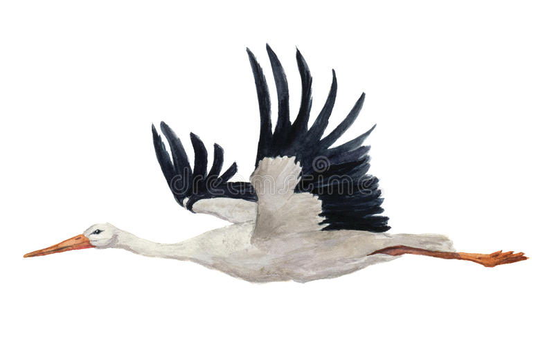 Watercolor flying white stork. Hand painted ciconia bird illustration isolated on white background. For design, prints stock image