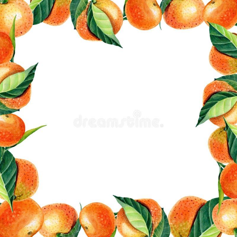 Watercolor frame greeting card with orange tangerine. Watercolor greeting card with orange tangerines,leave on white background.Mandarin orange fruit. floral stock illustration