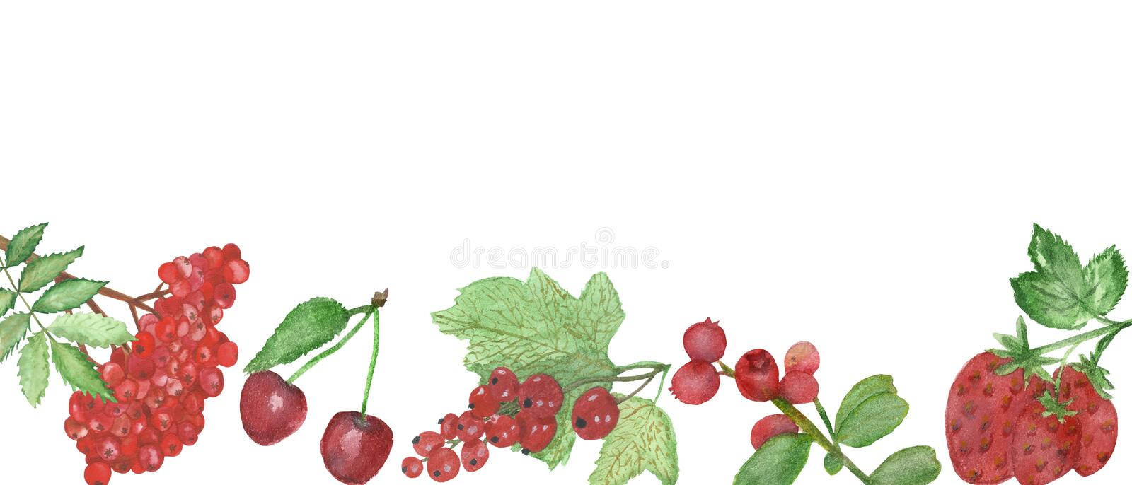 Watercolor frame of red berries isolated on white background. Flower pattern for beautiful design of wedding invitations, greeting cards, saving date with stock illustration