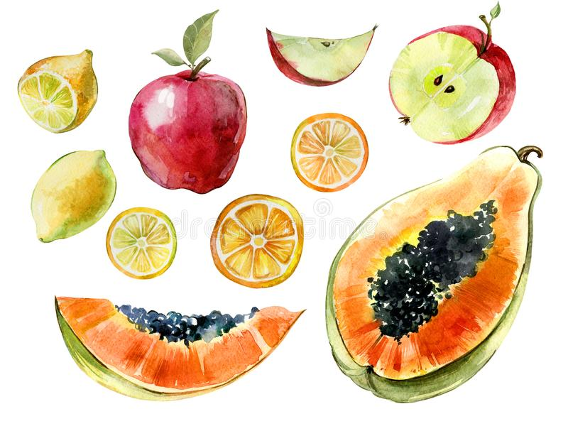 Watercolor fruit set. Papaya, lemon, apple cut in halves and slices isolated on white background. Tropical fruit in cross section. Watercolor painting. Hand royalty free illustration