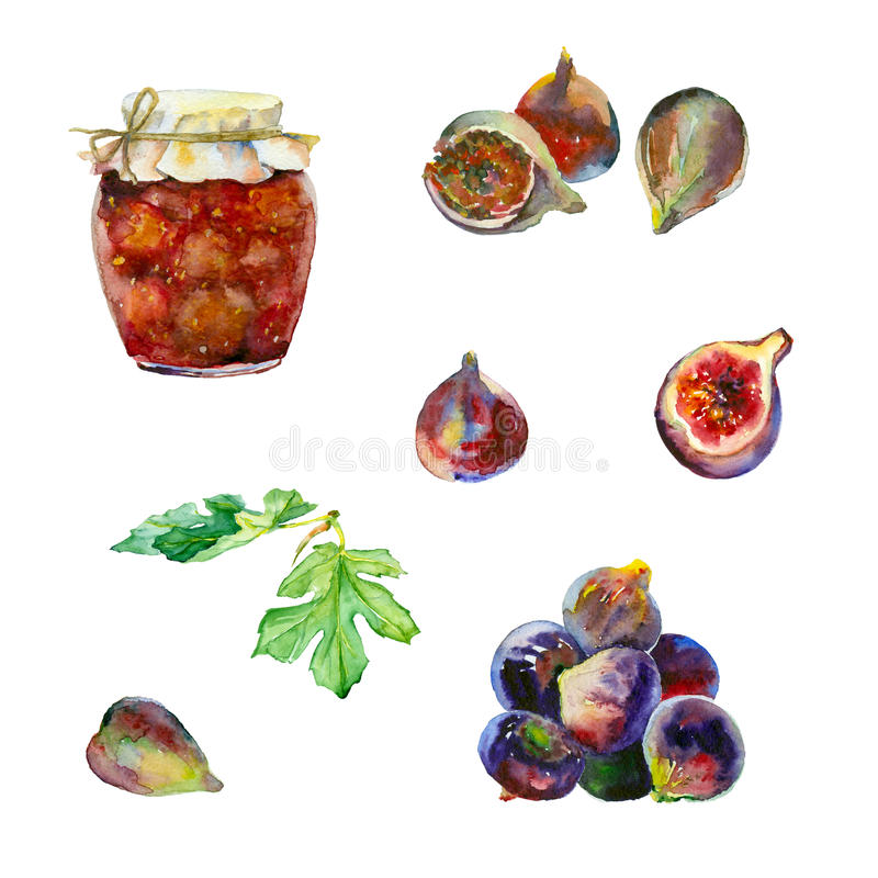 Watercolor fruits and jam. Watercolor painting. Set of fruits. Figs and jam on white background stock illustration