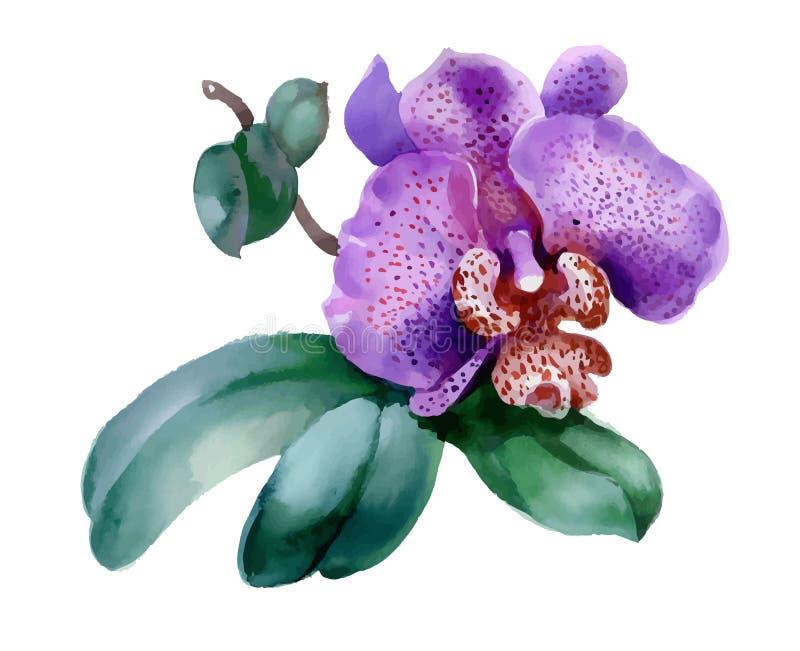 Garden orchid flower on white background royalty free illustration