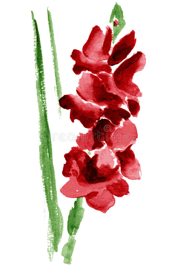 Watercolor Gladiolus Flower Stock Vector Illustration Of