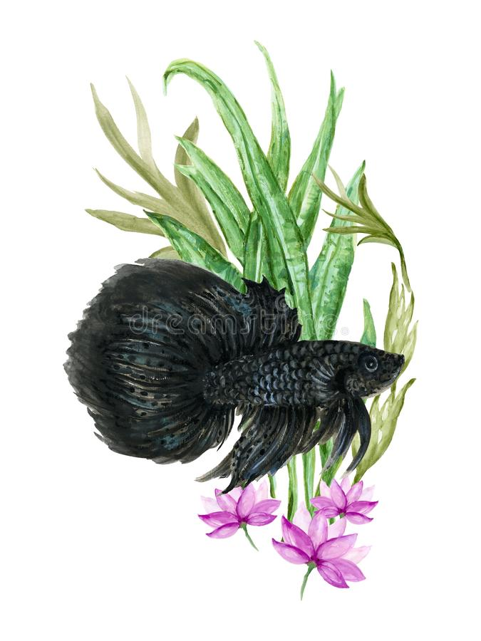 Watercolor Gouache Asian Chinese Japanese. Watercolor Gouache beautiful Asian Chinese Japanese .Siamese Betta Fighting fish and Coral Aquatic plants elements royalty free illustration