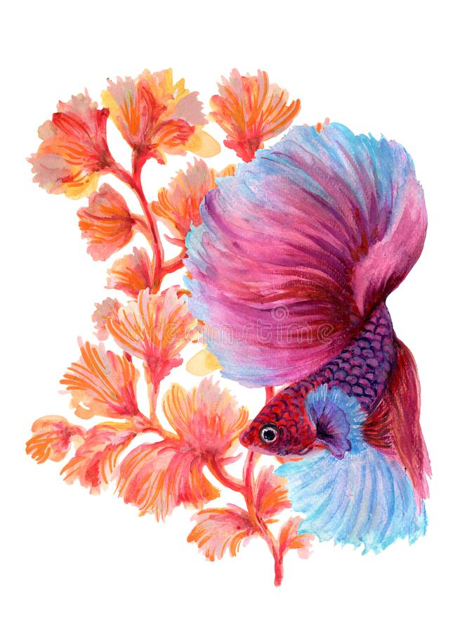 Watercolor Gouache Asian Chinese Japanese. Watercolor Gouache beautiful Asian Chinese Japanese .Siamese Betta Fighting fish and Coral Aquatic plants elements stock illustration