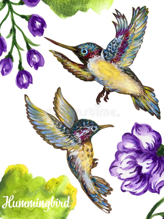 Watercolor gouache illustration flying hummingbird isolated on w vector illustration