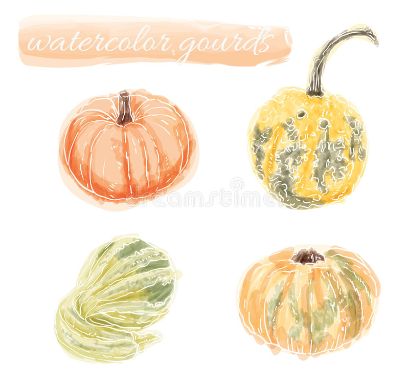 Watercolor Gourds and Pumpkin. Vector collection of hand drawn water color gourds and pumpkin stock illustration