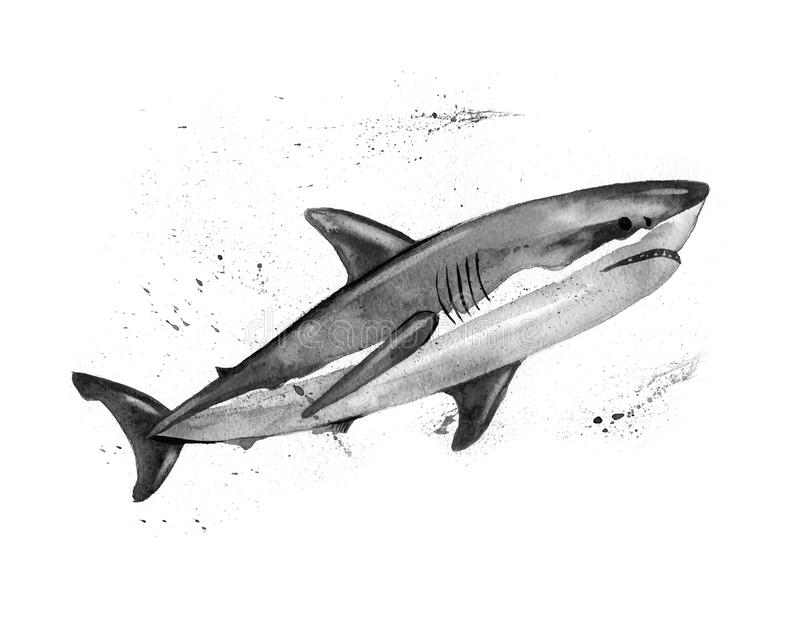 Watercolor great white shark. Hand painting. royalty free illustration