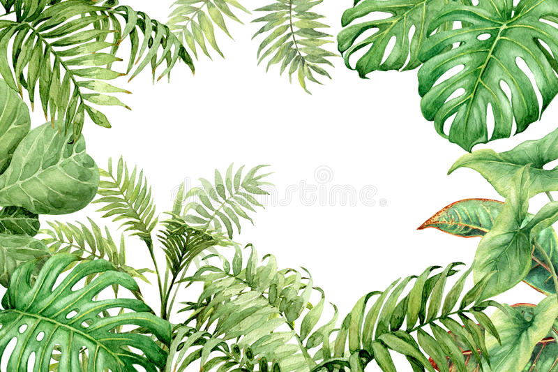 Watercolor green background with tropical plants stock illustration