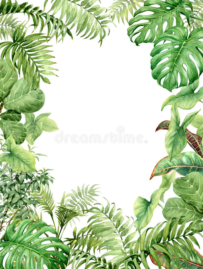 Watercolor green background with tropical plants royalty free illustration