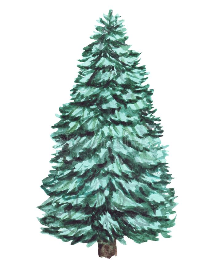 Watercolor green Christmas tree on white background. Isolated hand drawn elements for prints, cards vector illustration