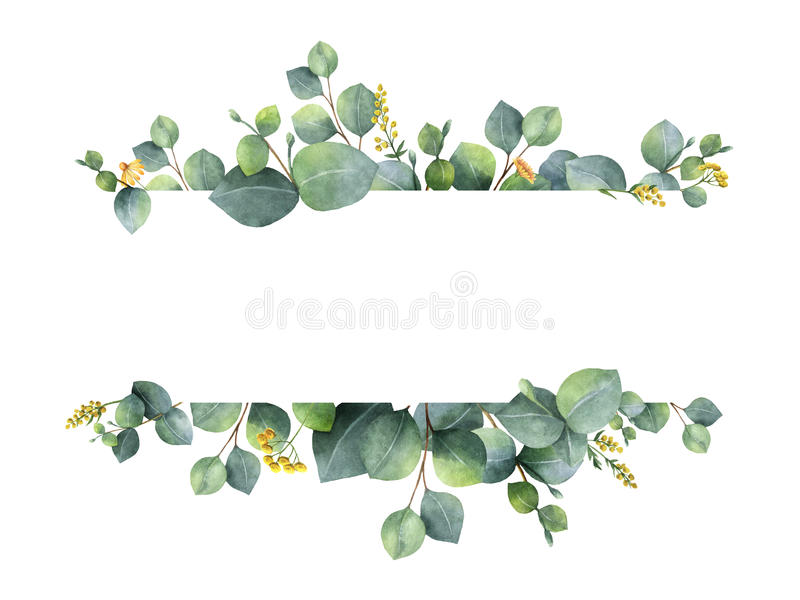 Watercolor green floral banner with silver dollar eucalyptus leaves and branches isolated on white background. vector illustration