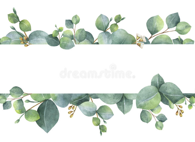 Watercolor green floral card with silver dollar eucalyptus leaves and branches isolated on white background. Watercolor hand painted green floral card with