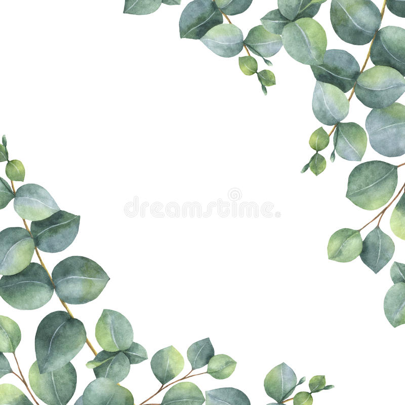 Watercolor green floral card with silver dollar eucalyptus leaves and branches isolated on white background. vector illustration