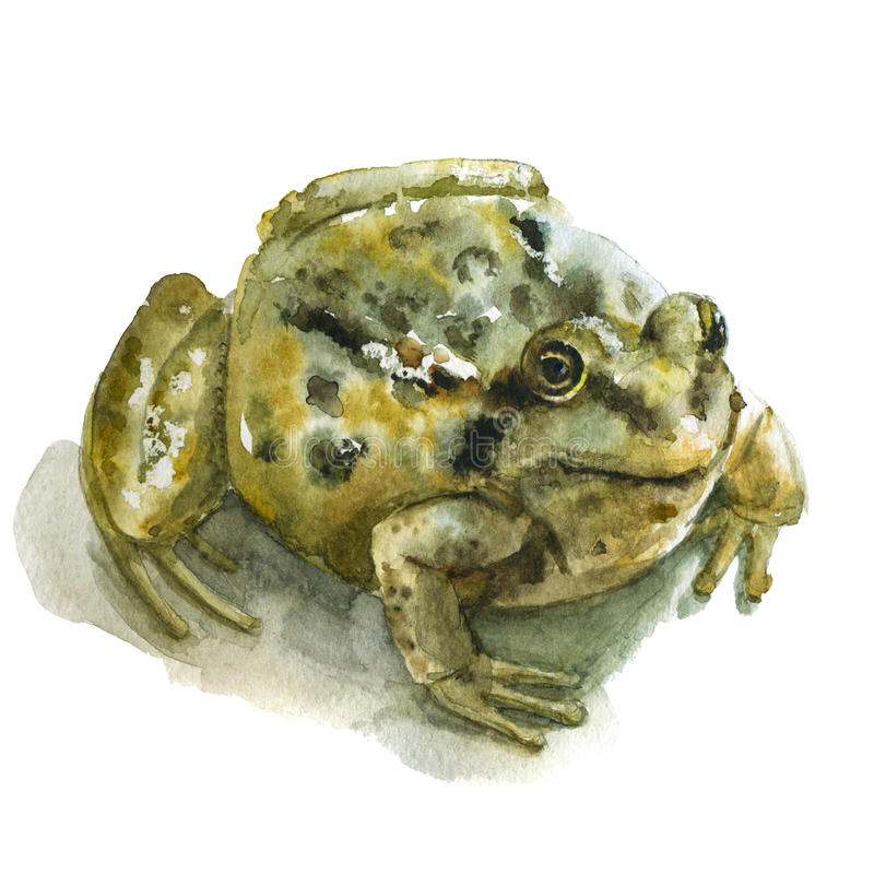 Watercolor green frog stock images