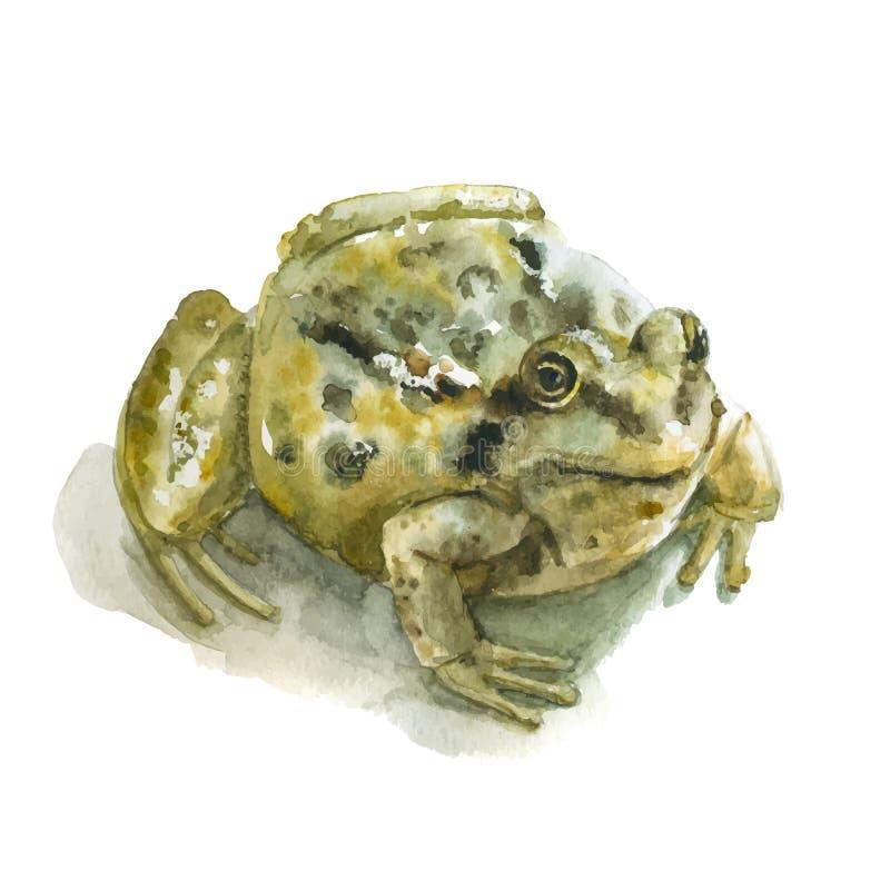 Watercolor green frog stock image