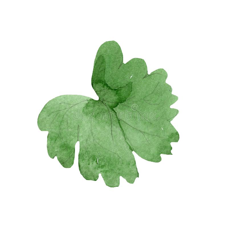 Watercolor green leaf of blue aquilegia flower. Floral botanical flower. Isolated illustration element. Aquarelle wildflower for background, texture, wrapper stock illustration