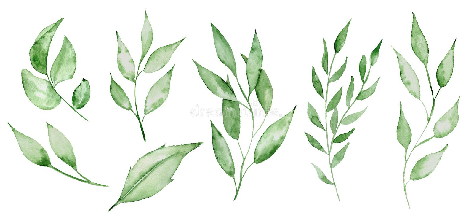Watercolor green leaves and brunches Greenery herb hand rawn illustration. Watercolor green leaves and brunches Greenery herb stock illustration