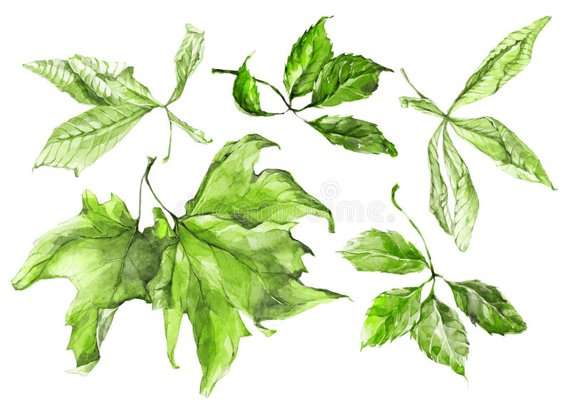 Watercolor green leaves set royalty free illustration