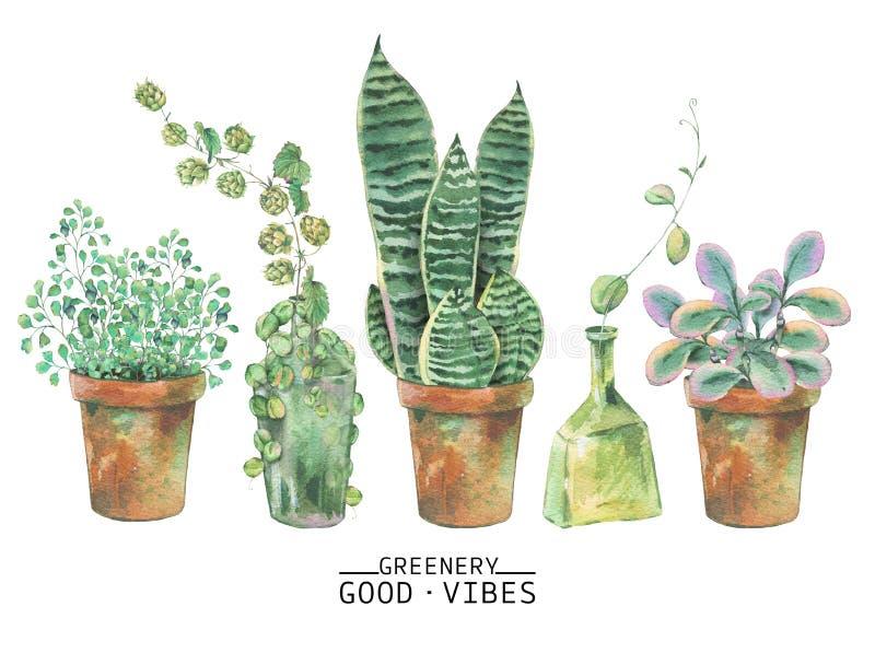 Watercolor green plants in pots vector illustration