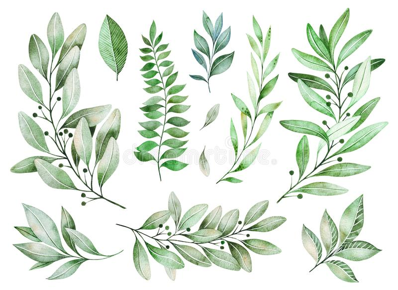 Texture with greens,branch, leaves, fern leaves, foliage. Watercolor greens collection. texture with greens, branch, leaves, fern leaves, foliage. Perfect for stock illustration