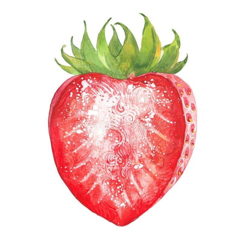 Free Watercolor Half Strawberry Stock Image - 66419361