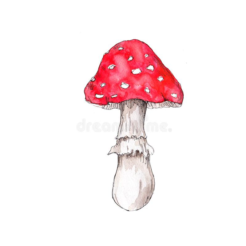 Free Watercolor Hand Drawn Artistic Colorful MUSHROOMS Fall  Season Vintage Isolated Icon Royalty Free Stock Photography - 159842317